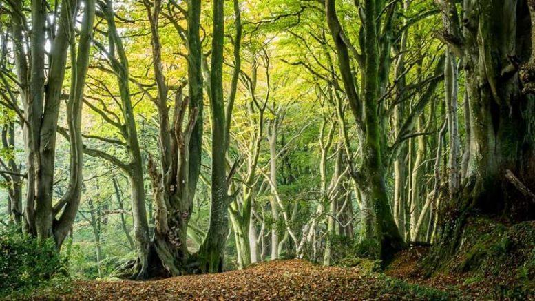 Billingham volunteer photographer wins Woodlands Trust award
